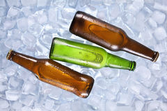 Cooling beers Royalty Free Stock Image