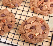 Cooling Chocolate Chip and Pecan Cookies Royalty Free Stock Photography
