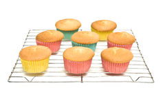 Cooling Cupcakes Stock Photography