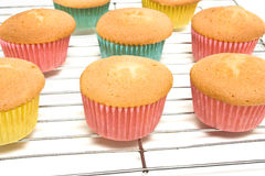 Cooling Cupcakes Royalty Free Stock Photography