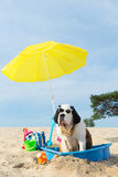 Cooling down for dog at the beach Royalty Free Stock Photography