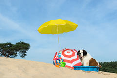 Cooling down for dog at the beach. Funny dog is having a cooling down with water and parasol at the beach in the summer Stock Photography