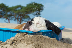 Cooling down for dog Stock Photos