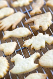 Cooling freshly baked cookies Royalty Free Stock Image