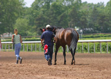 Cooling Off. Cooling down a horse after the race Royalty Free Stock Photos