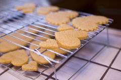 Cooling racks of Valentine's Day various Heart Shaped Cookies. Stock Photography