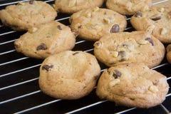 Coolling racks with freshly baked cookies. Freshly baked cookies with chocolate chips and walnut on cooling racks Stock Photo
