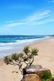 Coolum Royalty Free Stock Image
