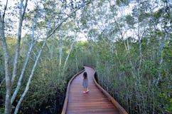 Coombabah Lakelands -昆士兰澳大利亚 免版税图库摄影