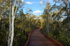 Coombabah Lakelands - il Queensland Australia Fotografia Stock Libera da Diritti