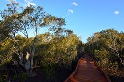 Coombabah Lakelands - il Queensland Australia Fotografia Stock