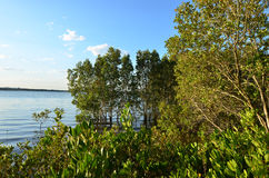 Coombabah Lakelands - Queensland Αυστραλία Στοκ Φωτογραφίες