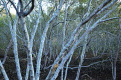 Coombabah Lakelands, Queensland Australia - Zdjęcie Stock