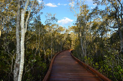 Coombabah Lakelands -Queensland Australia Royalty Free Stock Photo