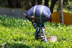 Coonoor, tamil nadu, India, Marzec 22, 2015: Niezidentyfikowana kobiety przewożenia torba na jej głowie Fotografia Stock