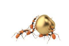 Coopération de travail d'équipe de fourmi et pomme d'or illustration 3D Photos stock