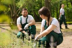 Coopération sans heurt entre les jardiniers passionnés Images libres de droits