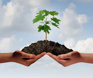 Cooperation Growth. Business symbol as two hands holding up a heap of earth with a tree sapling growing Royalty Free Stock Photo