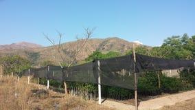 Cooperative greenhouse in Central America. Cooperative greenhouse under netting in rural Central America on sunny hillside Stock Image