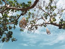 Free Coops Lamps Hanging Decorations On The Tree Stock Photos - 121070423