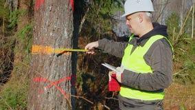 Coordenador da floresta com um PC da tabuleta e fita métrica perto da árvore vídeos de arquivo