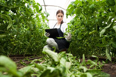 Coordenador fêmea novo da agricultura que inspeciona plantas Imagem de Stock