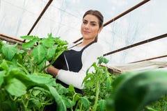 Coordenador fêmea novo da agricultura que inspeciona plantas Imagens de Stock