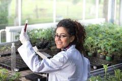Coordenador que trabalha na proteção de planta fotos de stock