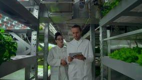 Coordenadores de controle da qualidade com tablet pc que andam através da estufa moderna, examinando e discutindo o vegetal filme