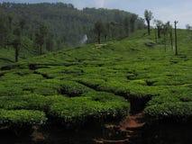 Coorg имущества чая природы Стоковое фото RF
