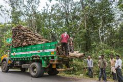 Tribal crew loads tree chunks on truck, Coorg India. Coorg, India - October 29, 2013: Crew of tribal men load pieces of tree trunks on green dump truck along royalty free stock images
