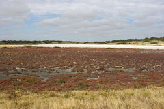 Coorong National Park, Australia Royalty Free Stock Photos