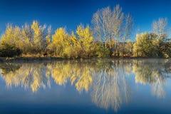 Coot jesieni Jeziorni odbicia Zdjęcie Royalty Free