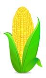Cop de maïs avec les lames vertes illustration de vecteur