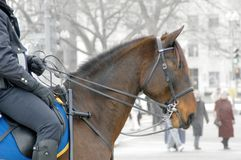 Cop on horseback. Police officer patrolling on horseback; (taken in Washington DC on the day of George W Bush's inauguration 2005 Stock Photography