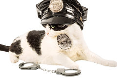 Cop police cat royalty free stock image