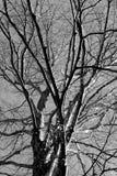 Copa de árbol Imagen de archivo