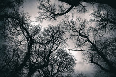 Copa de árvore do dossel Fotos de Stock Royalty Free