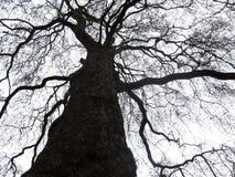 Copa de árvore preta sob o céu branco Fotos de Stock Royalty Free