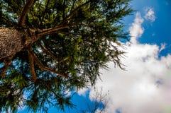Copa de árvore sob o céu azul Fotografia de Stock