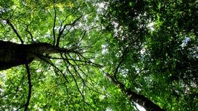 Copa de árvore verde Fotos de Stock Royalty Free