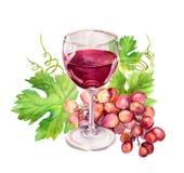 Copa de vino con las hojas de la vid, bayas de la uva watercolor stock de ilustración