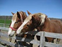 Copains de cheval Images libres de droits