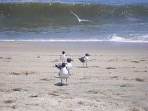 Copains de plage Photographie stock libre de droits
