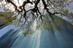 Copan大厦在圣保罗,巴西 库存照片