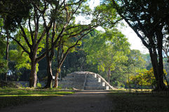 Copan Archeological park Royalty Free Stock Photography