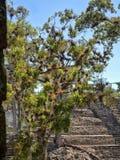 Copan arkeologisk plats av Mayan civilisation, inte långt från gränsen med Guatemala Det var huvudstaden av det huvudsakliga klas arkivbild