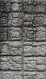 Copan carvings Royaltyfri Fotografi
