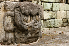 Copan Mayan ruins in Honduras Stock Photography