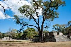 Copan-Ruinen Stockfoto